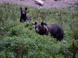 Bärenspuren