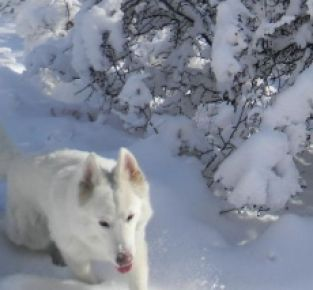 Spuren im Schnee