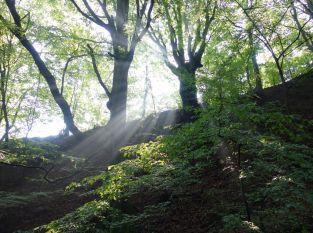 Žarnovica -  Banská Štiavnica – Žarnovica