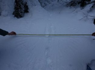 Spurenrätsel: Gefieder im Schnee