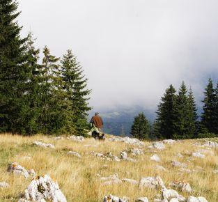 Mit Wildtieren leben - Studienreise in die Slowakei