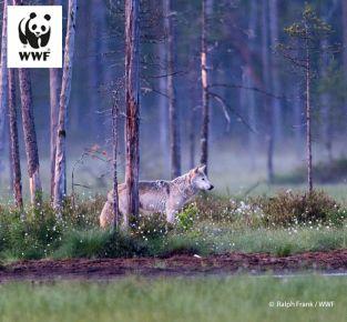 Wolf und Mensch - Mythen, Monitoring und Miteinander_error